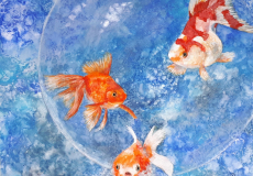 Poissons-chinois-bulle-L